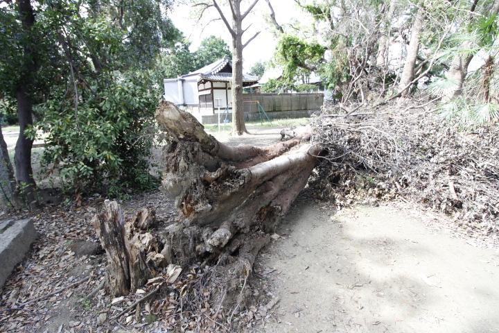 保存樹1.