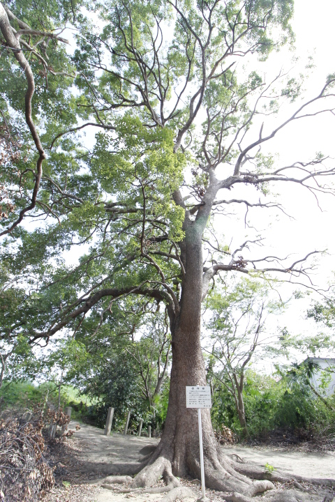 保存樹2...